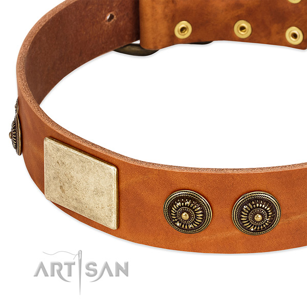 Exceptional dog collar made for your attractive canine