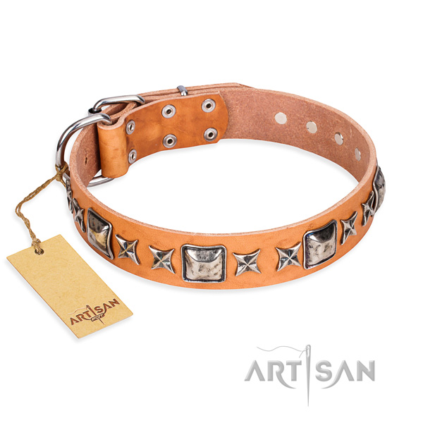 Fancy walking dog collar of durable full grain natural leather with adornments