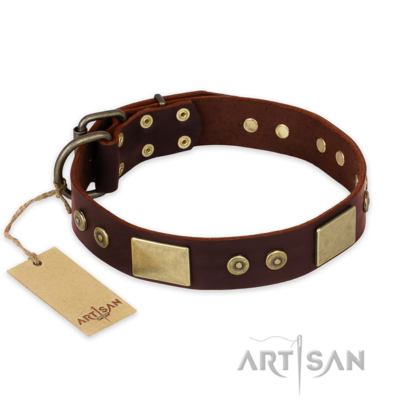 Significant full grain leather dog collar for daily walking