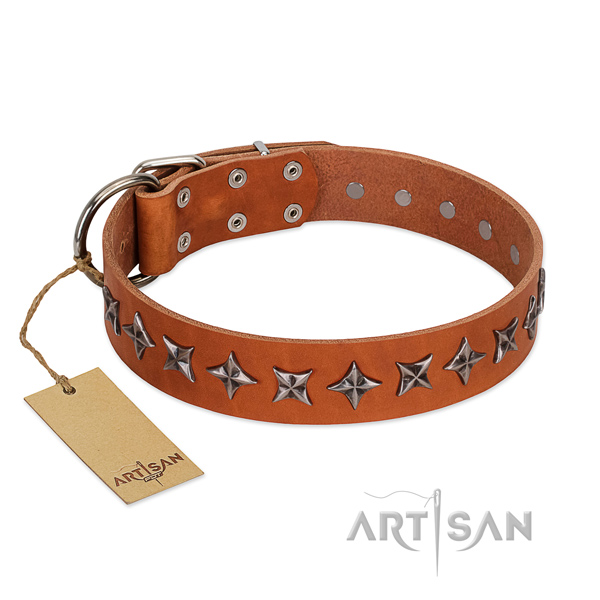 Daily walking dog collar of durable full grain leather with embellishments