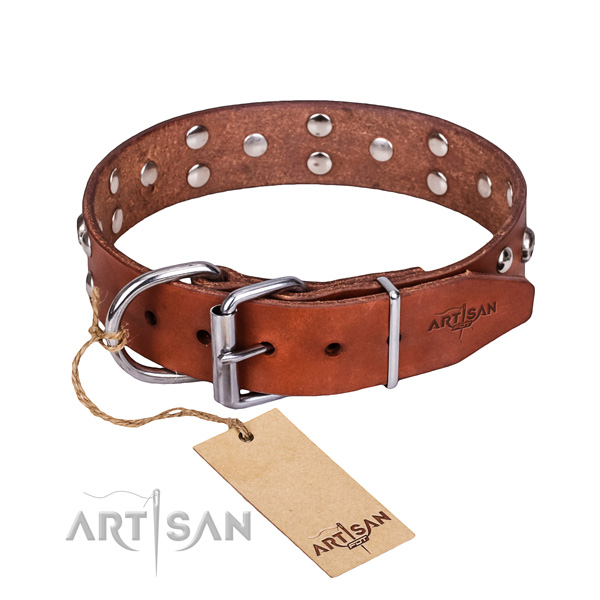 Walking dog collar of fine quality full grain leather with embellishments