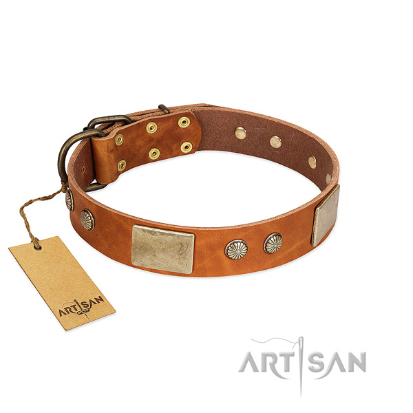 Adjustable full grain genuine leather dog collar for everyday walking your four-legged friend
