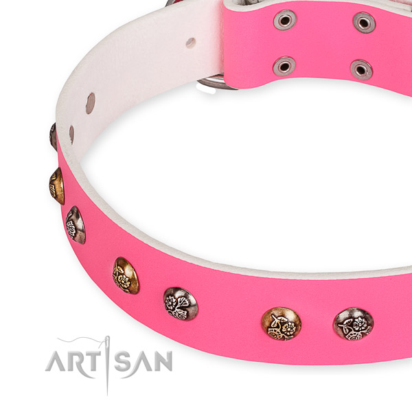 Full grain leather dog collar with amazing corrosion resistant studs