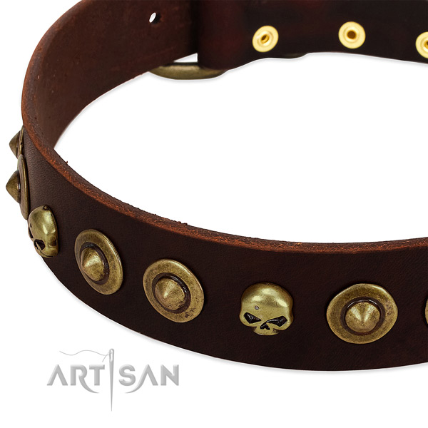 Top notch studs on natural leather collar for your four-legged friend