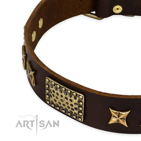 Leather collar with corrosion resistant fittings for your lovely four-legged friend