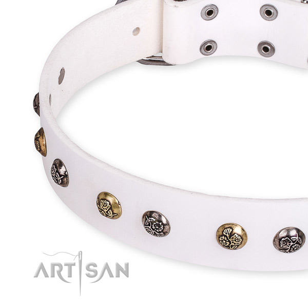 Leather dog collar with stunning corrosion proof adornments