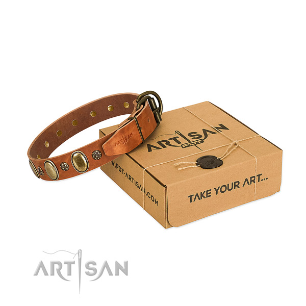Walking high quality leather dog collar with adornments