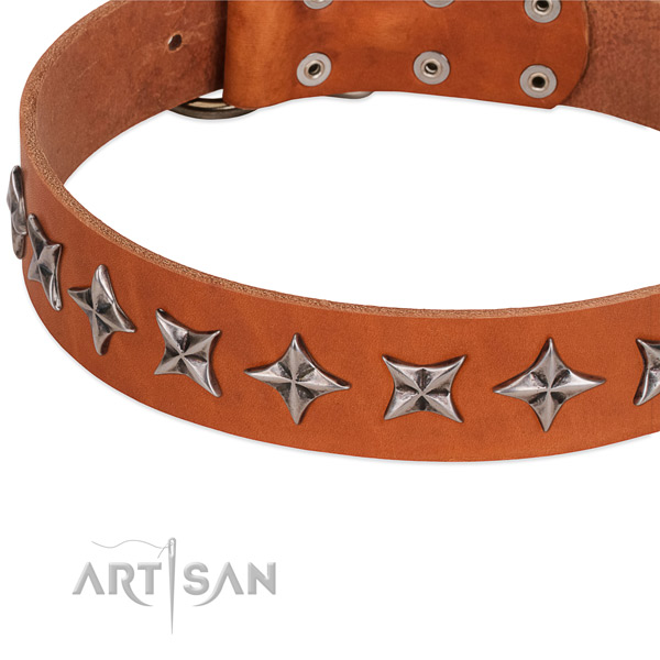 Walking decorated dog collar of strong leather
