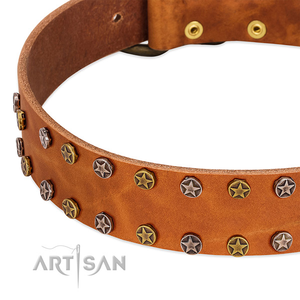 Daily walking natural leather dog collar with trendy embellishments