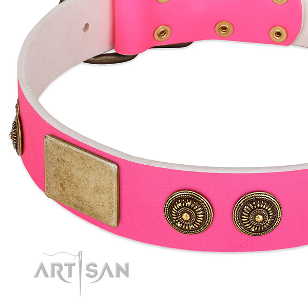 Designer dog collar crafted for your handsome doggie