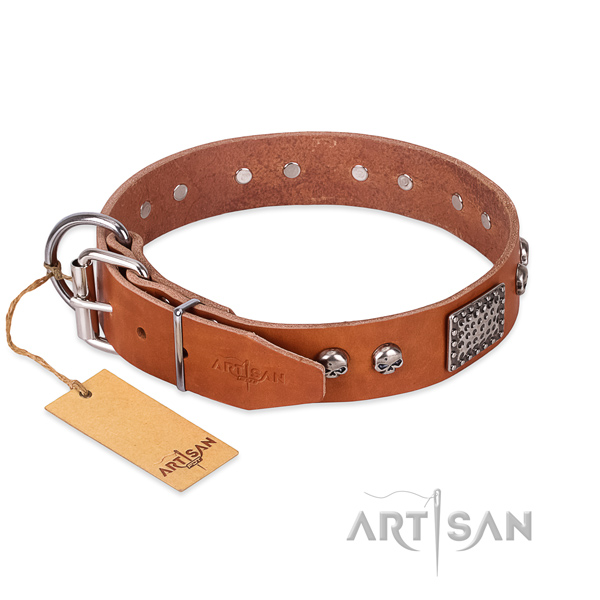 Rust resistant studs on everyday walking dog collar