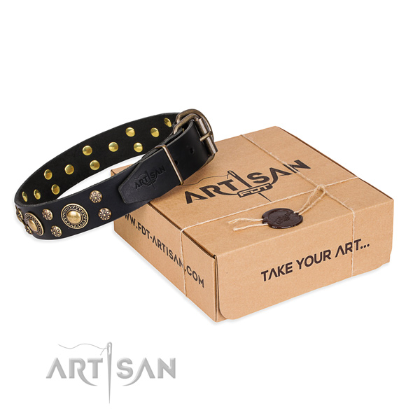 Stylish walking dog collar of reliable full grain natural leather with adornments
