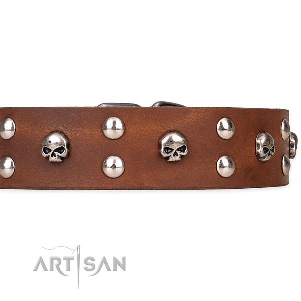 Everyday walking decorated dog collar of finest quality full grain natural leather