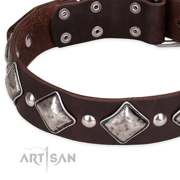 Everyday walking adorned dog collar of high quality full grain leather
