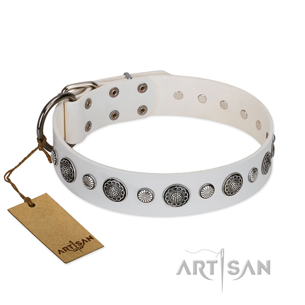 Top rate full grain leather dog collar with corrosion proof hardware
