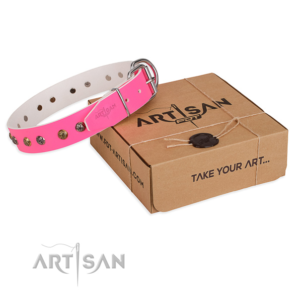 Everyday walking dog collar with Awesome rust resistant adornments