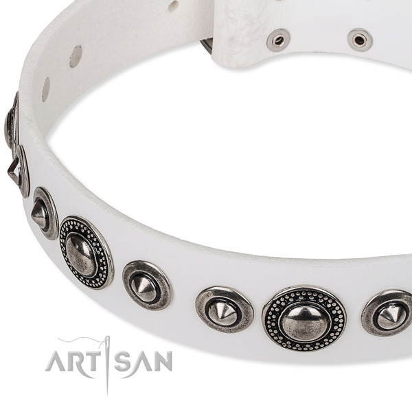Everyday use studded dog collar of durable full grain natural leather