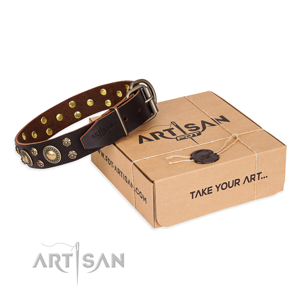 Basic training dog collar of top quality full grain natural leather with studs