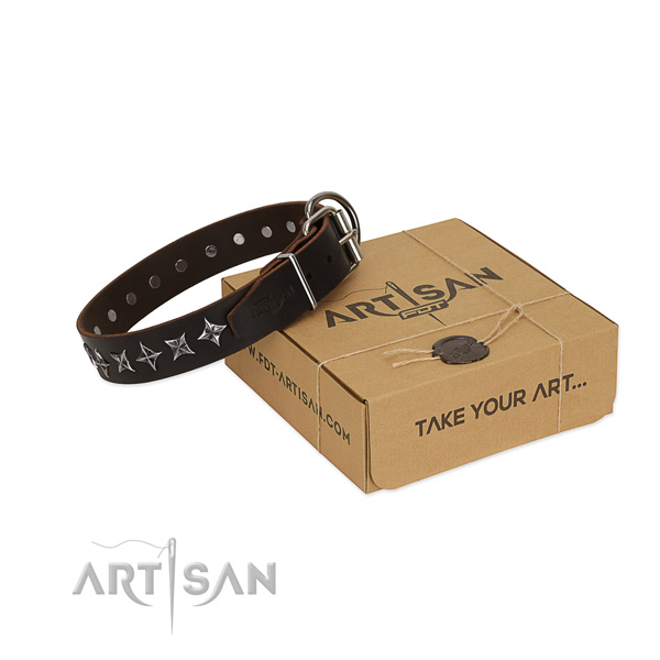 Fancy walking dog collar of top notch full grain genuine leather with adornments