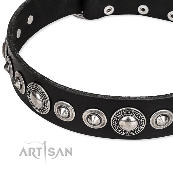 Everyday walking studded dog collar of quality full grain natural leather