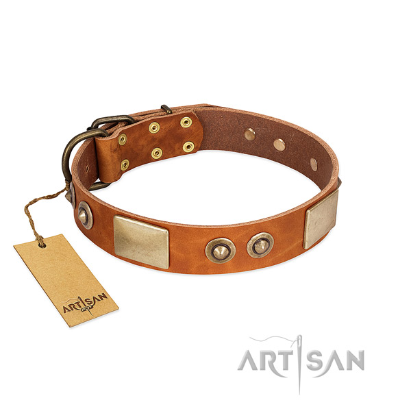 Easy to adjust full grain leather dog collar for everyday walking your canine